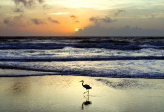 Edgewater & Tidewater Condos For Rent, Panama City Beach FL